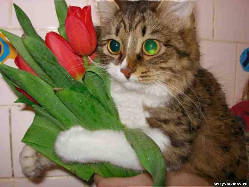 Открытки поздравления с котами