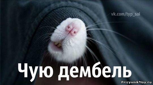 http://prizyvnikmoy.ru/_fr/9/7164306.jpg